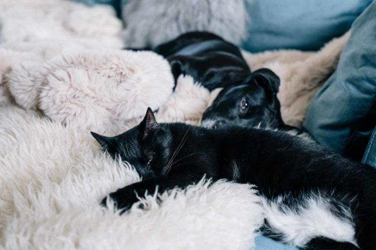 Κατοικίδια και πυροτεχνήματα : Πώς να προστατεύσετε σκύλους και γάτες το βράδυ της Πρωτοχρονιάς | to10.gr