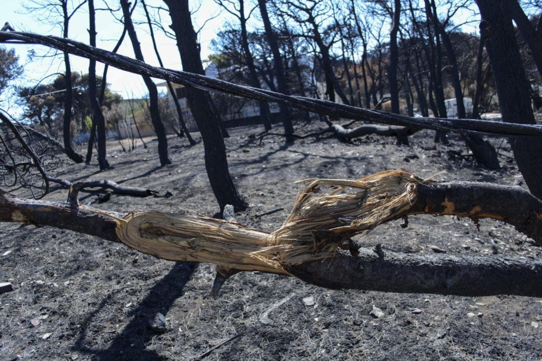 Ζάκυνθος: Εμπρησμό «βλέπει» ο δήμαρχος – Σε ύφεση τα δύο πύρινα μέτωπα | to10.gr