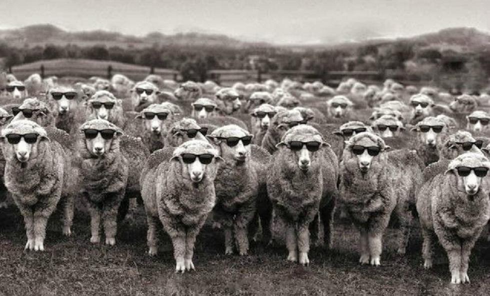 Οι ψηφοφόροι δεν είναι χαζοί, και σίγουρα δεν είναι πρόβατα   to10.gr