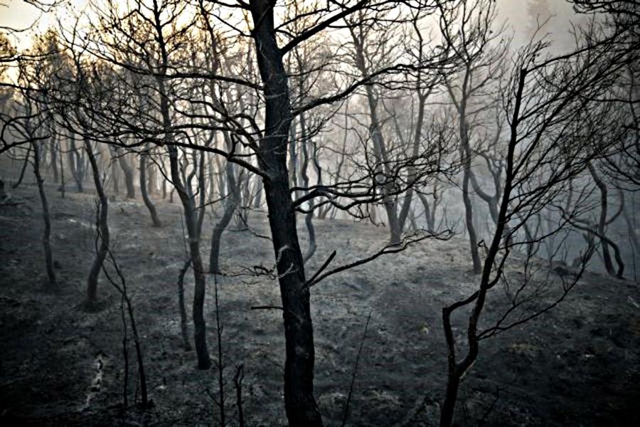 Κρανίου τόπος η Εύβοια: Η φωτιά σάρωσε τα πάντα (vid) | to10.gr
