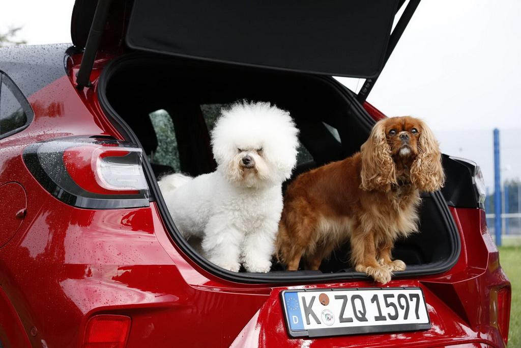 Mega Box: Κινητό ινστιτούτο περιποίησης σκύλων | to10.gr