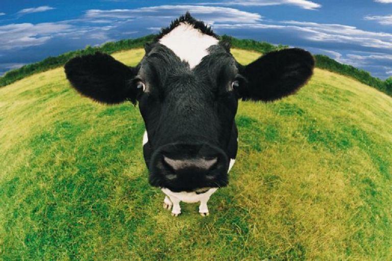 Κεραυνός σκότωσε 23 αγελάδες | to10.gr