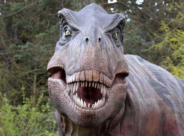 Γιατί οι δεινόσαυροι είχαν τόσο διαφορετικά μεγέθη και χρώματα | to10.gr