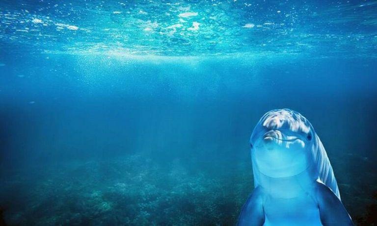 Συγκλονιστικό: Δείτε τι κάνουν τα δελφίνια εν μέσω καραντίνας (pics)   to10.gr
