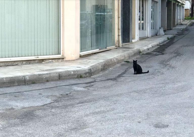Χαλκίδα ειδήσεις: Όταν ένα τρομακτικό «τέρας» είχε βρεθεί στην γέφυρα! | to10.gr