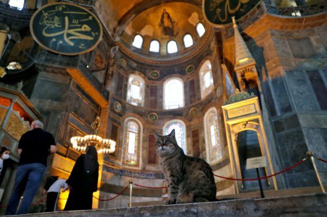 Η γάτα που κατοικεί μόνιμα στην Αγία Σοφία   to10.gr