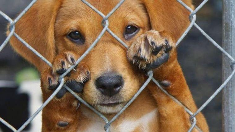 Συλλήψεις και αυτόφωρο για την κακοποίηση ζώων- Τι αναφέρει εγκύκλιος του Αρείου Πάγου | to10.gr