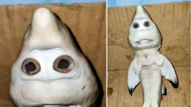 Έμβρυο καρχαρία έγινε viral εξαιτίας της δυσμορφίας του | to10.gr