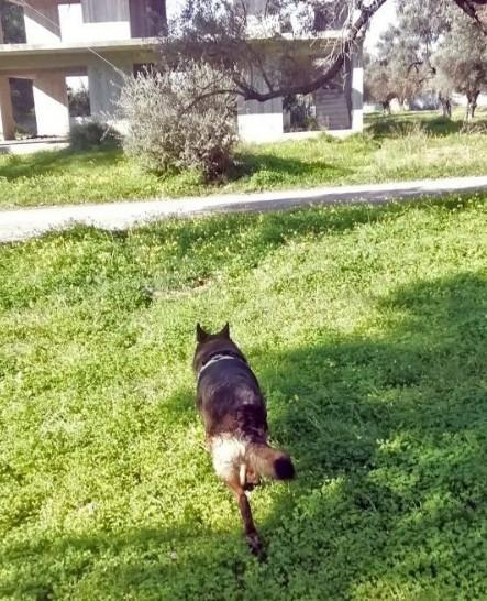 Κρήτη : Ασυνείδητος τοποθέτησε δηλητηριασμένα δολώματα – Τα κατανάλωσαν πάνω από 25 σκυλιά | to10.gr