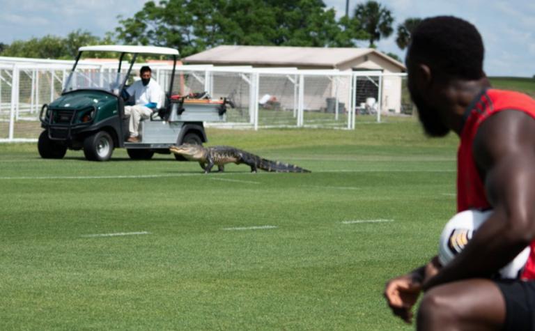 Αμερική: Αλιγάτορας εισέβαλε εν ώρα προπόνησης (vid) | to10.gr