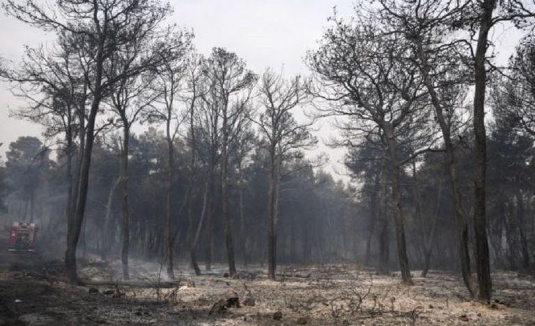 Φωτιά στον Σχίνο: Κραυγή αγωνίας από τον δήμαρχο Μεγαρέων – «Ανεξέλεγκτη η κατάσταση» | to10.gr