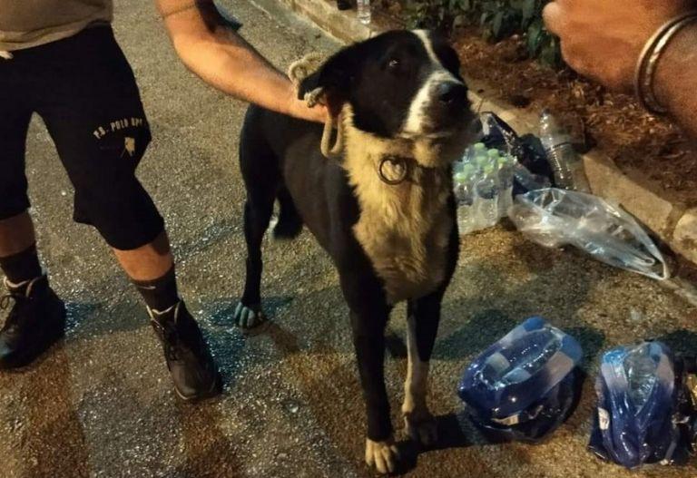 Βαρυμπόμπη – Στήνεται μηχανισμός διαχείρισης κρίσεων για ζώα – Πώς μπορείτε να βοηθήσετε   to10.gr