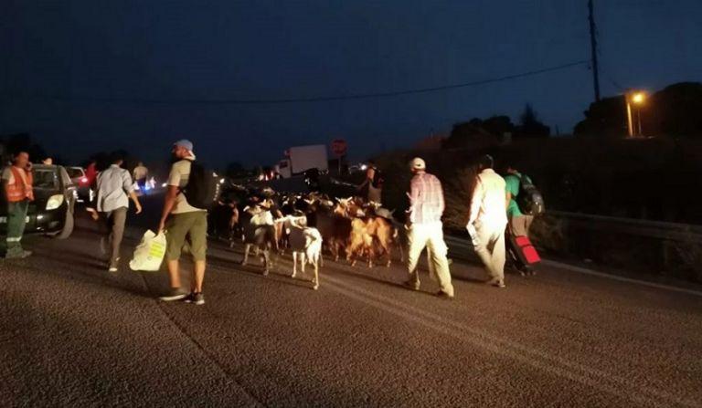 Συγκλονιστικές εικόνες από τις Αφίδνες – Κάτοικοι φεύγουν να σωθούν με βαλίτσες και τα ζώα τους | to10.gr